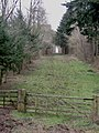 Ride through Swangrove wood - geograph.org.uk - 326830.jpg