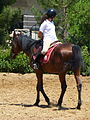 Riding a Horse Backwards 1110830.jpg