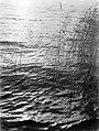 Riet in het water, Bestanddeelnr 190-0651.jpg