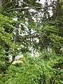 Ringstad gård, den 10 juli 2007, bild 1.JPG