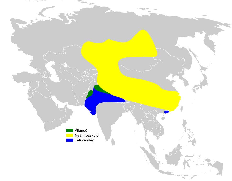 Riparia diluta distribution map