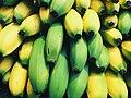 Ripening bananas (Unsplash).jpg
