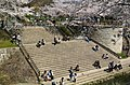 Riverside Hanami (2379013765).jpg