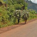 Road between Bujumbura and Gitega - Flickr - Dave Proffer (9).jpg