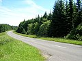 Roadside Forest - geograph.org.uk - 204572.jpg