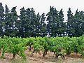 Rochefort du Gard - Vignes.jpg