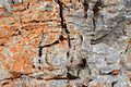 Rock texture Kymi Euboea Greece.jpg