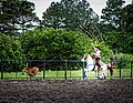 Rodeo Event Calf Roping 14.jpg