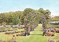 Rose Garden – Elizabeth Park – Hartford, CT 1930 (5168274176).jpg