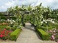 Rose Garden - panoramio (3).jpg