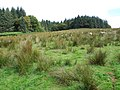 Rough grazing for sheep - geograph.org.uk - 501735.jpg
