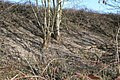 Rubbish on the embankment - geograph.org.uk - 1186918.jpg