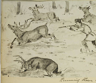 Hudson's Bay Company - Sketches of Hudson Bay Life: Running them down, by Harry Bullock-Webster