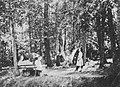 Russischer Photograph - Pilzesammeln gehörte zum jährlichen Sommer- und Herbstritual (2) (Zeno Fotografie).jpg