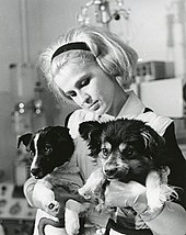Soviet Space Dogs Wikipedia
