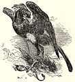 SFR b+w - secretary bird.jpg
