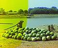 Sabirabad(Petropavlovka).Qarpızların Kür çayı boyunca idxal olunması.jpg