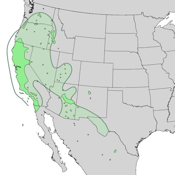 File:Salix lasiolepis range map 2.png