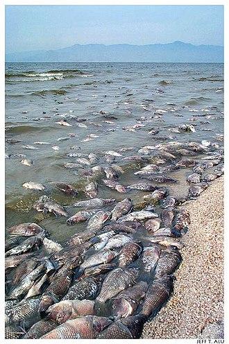 Environment of California - The Salton Sea is an endorheic basin of evaporating irrigation return flows.