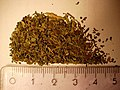 Salvia divinorum drug.jpg