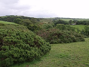 Scene east of Chyanvounder - geograph.org.uk - 474319.jpg