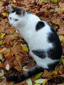 Schwarz weiße Katze 2009