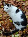 Schwarz weiße Katze 2009.JPG