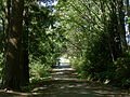 Seattle - Schmitz Park road 01.jpg