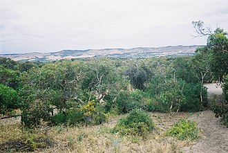 Aldinga Scrub Conservation Park - Reserve as viewed from Seagull Street, Aldinga Beach