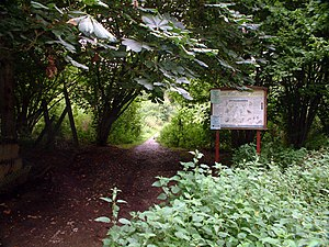 Selsdon Wood - Image: Selsdon Wood Nature Reserve, CR0 geograph.org.uk 41201