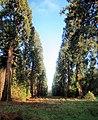 Sequoia Avenue - geograph.org.uk - 1068861.jpg