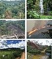 Serra do Pingano Forest (10.3897-zse.96.51997) Figure 7.jpg