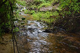 Shanks Creek Poinsett State Park.jpg