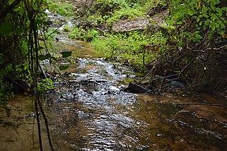Poinsett State Park - Image: Shanks Creek Poinsett State Park