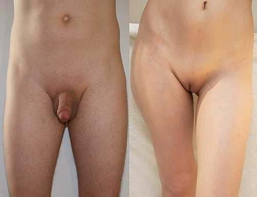 Shaved male and female genitalia.JPG