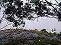 Silent Valley Kodaikanal - panoramio (1).jpg
