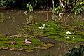 Singapore Botanic Gardens (4042375751).jpg