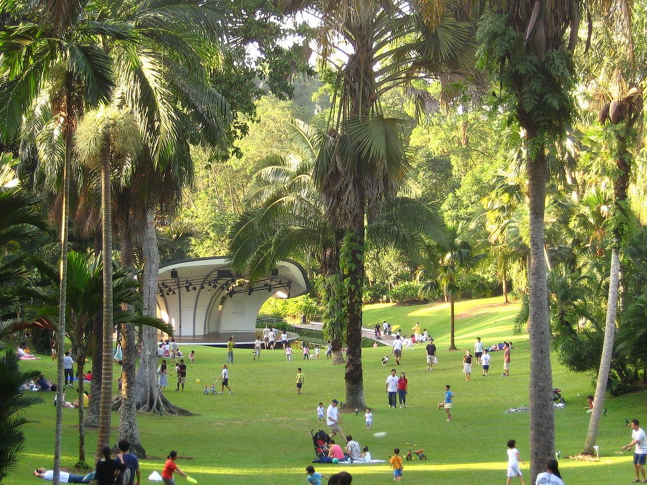 File singapore botanic gardens palm wikimedia for Jardin botanique singapour