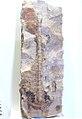 Skolithos dufrenyoi - Ordovician- Santa Cruz de Ateca, Zaragoza, Spain - Museo Geominero.jpg