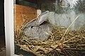 Skrukkeli-kaninen.jpg