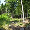 Sleza-forest-080603-02.jpg