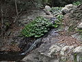 Small cascade above Mcgrory Falls.jpg