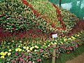 Snap from Lalbagh Flower Show Aug 2013 8578.JPG