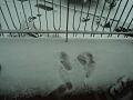 Snow in Rome 02.jpg