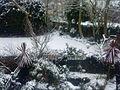 Snowy garden, Sydenham.JPG