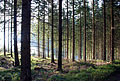 Soboth Wald bei St Leonhard.jpg