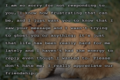 Sorry for not responding text on picture of sad cat.png