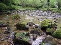 Sotobosque en el rio Latarma.JPG