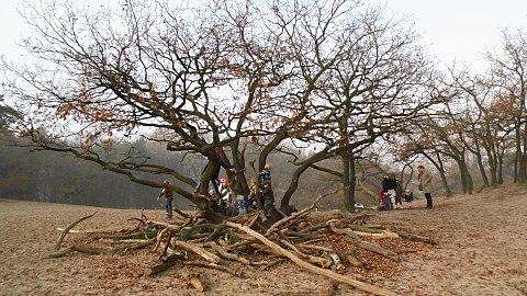 Speelboom in De Loonse en Drunense Duinen.JPG