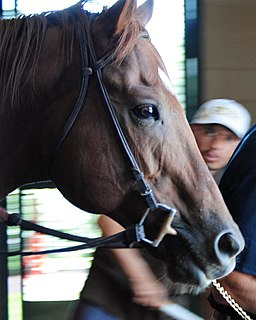 Speightstown (horse) American-bred Thoroughbred racehorse